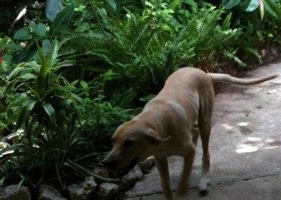 Cornbread, the Rehab Dog