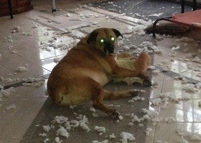 Mollie, A Rock-Hard Dog