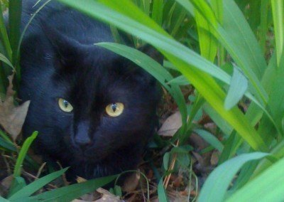 Hotshot—A Miracle Cat