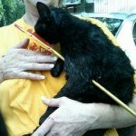 hotshot, a miracle cat