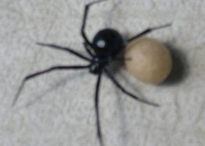 Black Widows Aren't Bad