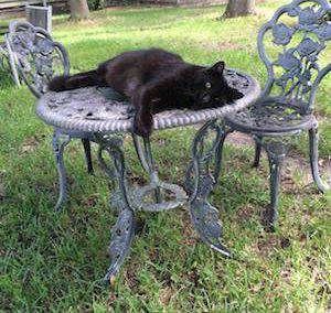 From Feral Cats to Lazy Cats