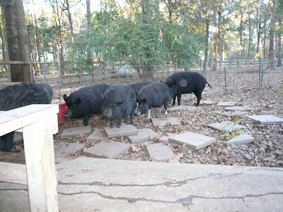 Life on an Animal Sanctuary and Animal Rescue